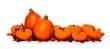 Border arrangement of autumn leaves and pumpkins