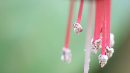 close up view of flower inner stems
