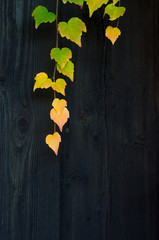 Autumn leaves on the wooden fence
