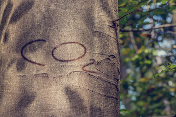 CO2 Carved into Tree Trunk