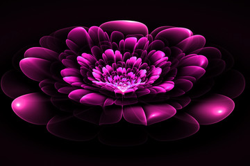 Fractal flower in purple. Computer generated graphics.