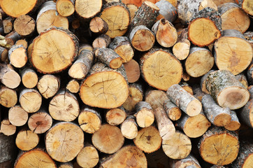Shot of a pile of cut tree trunks