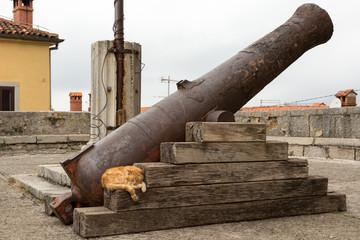 Canon et chat à Labin