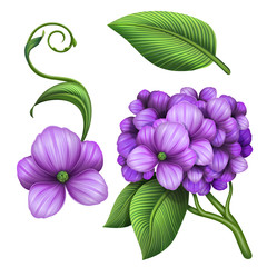lilac hydrangea branch with green leaf illustration