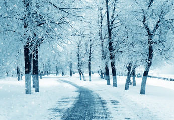 Winter alley, snowstorm