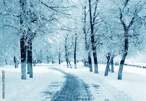 Leinwanddruck Bild Winter alley, snowstorm