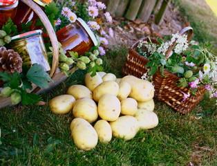 récolte légumes,fleurs au potager