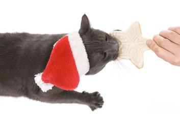 Christmas cat - Gray Cat Santa, Christmas pet with Santa Claus h