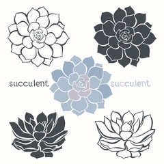Graphic set with succulents  isolated on white background. Hand