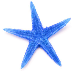 Blue seastar, isolated on white background.