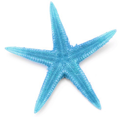 Light blue seastar, isolated on white background.