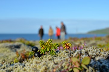 Bacche e muschi Islanda - Berries and mosses Iceland