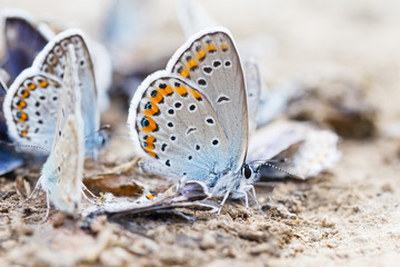 Butterfly family