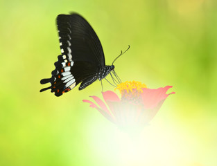Butterfly on a red flowers on Beautiful color backdrop