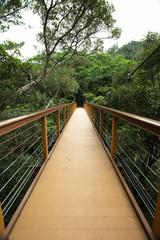 森林の吊り橋・比地大滝へ