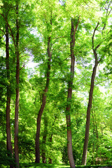 Beautiful trees in forest