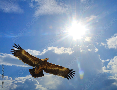 Aluminium Vogel Steppe Eagle