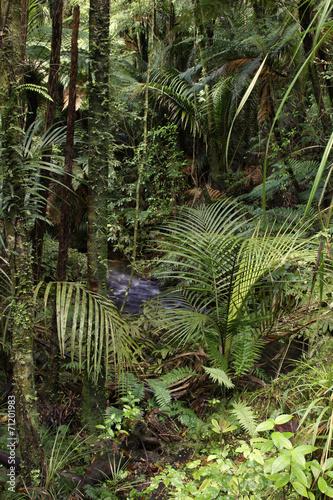 Fototapete urwald  Fototapete Urwald - Regen - Wald - Pixteria
