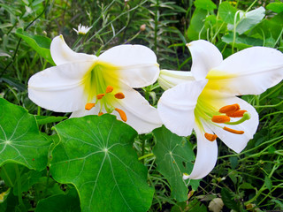 Delicate flower petals