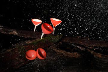Pink burn cup mushroom  with water drop
