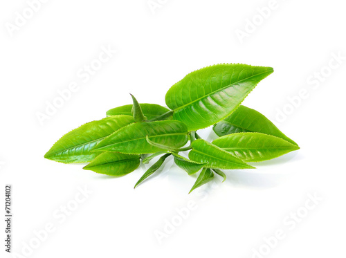 green tea leaf isolated on white background - 71204102