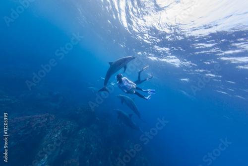 Foto op Canvas Dolfijn dolphin