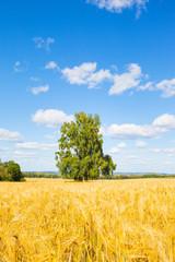 Tree in Weat Field