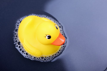 Rubber duck in the water