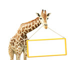 Giraffe with signboard
