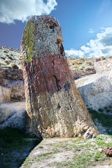Petrified redwood tree at Sigri, Lesvos