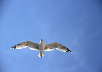 Single seagull on the blue sky
