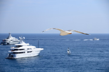 Seagull on the blue sky over ships and sea