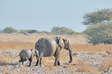 Itching elephant calf at Okaukeujo