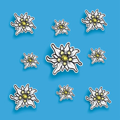 Edelweiss Paper Blue Background