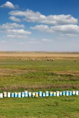 bee hive on field landscape