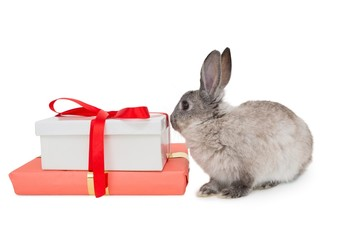 Bunny rabbit sitting next to a pink gift box