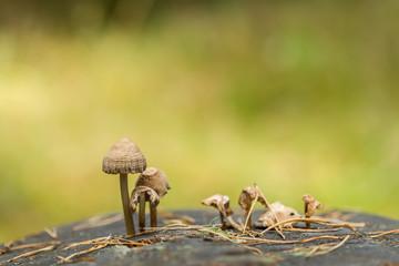 Mushrooms on stump