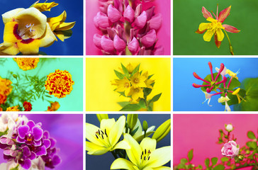 Коллекция из цветов.