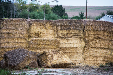 Stacks of dry hay