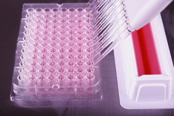 Pipetting with a 12-channel pipette in laboratory
