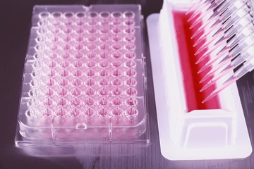 Tools for PCR amplification of DNA, 96-well plate