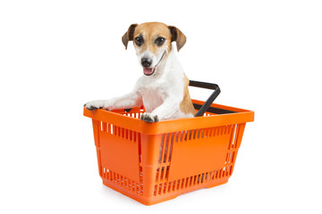 Dog jack russell terrier sitting in a shopping cart