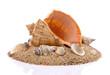 canvas print picture - Muszle z piaskiem na białym tle
