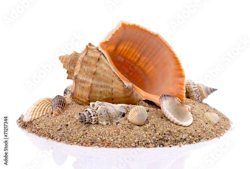 canvas print picture Muszle z piaskiem na białym tle