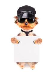 A dog wearing a cap and glasses with banner