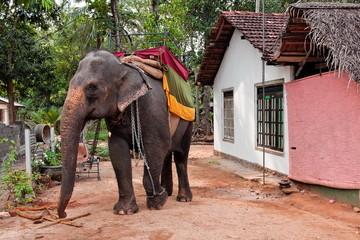 Eléphant à Ritigala au Sri-lanka