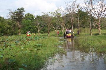Promenade à dos d'éléphant à Ritigala au sri-lanka