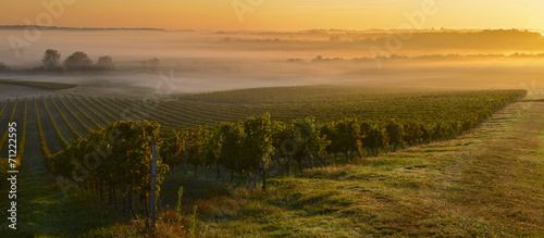 Aluminium Cultuur Vineyard Sunrise