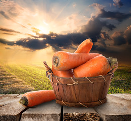 Carrot and landscape