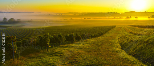 Poster Cultuur Vineyard Sunrise